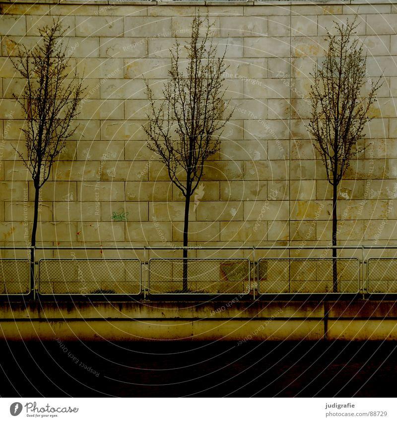 Drei Natur Baum Stadt Pflanze Wand Mauer 2 Küste 3 trist Reihe Geländer Hannover Abwasserkanal aufgereiht nebeneinander