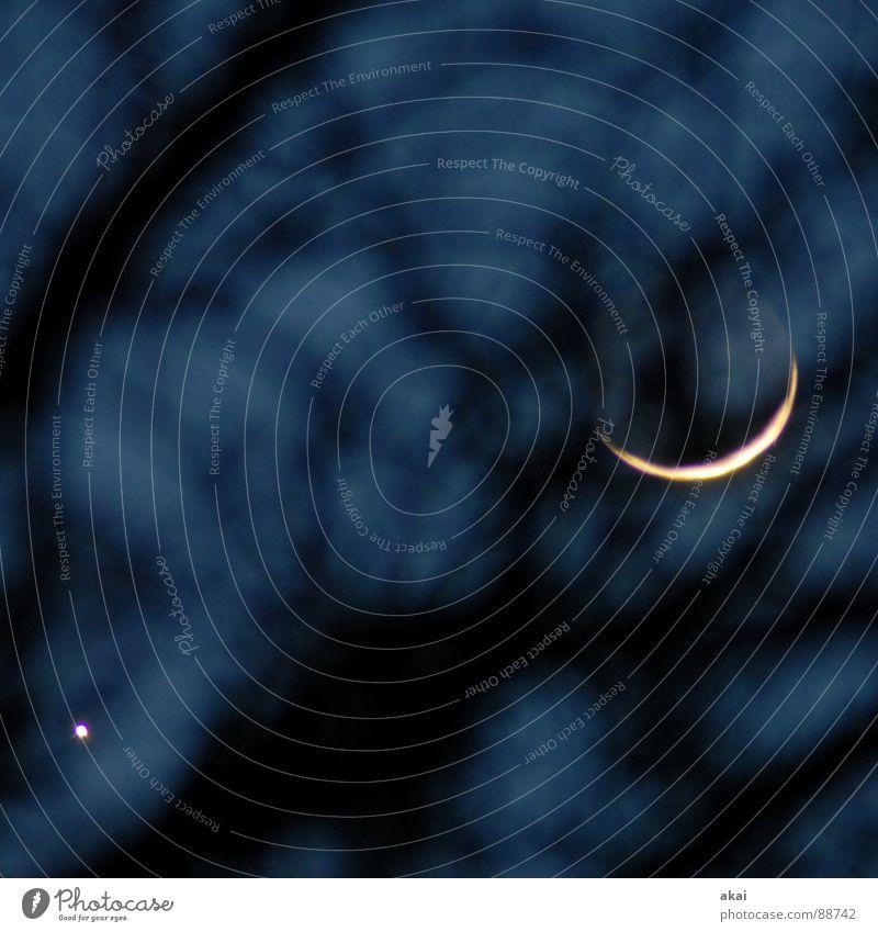Venus und Mond Himmel ruhig Stern Luftverkehr Baumstamm Abenddämmerung Planet Trabbi Himmelskörper & Weltall Satellit Himmelszelt Firmament Halbmond