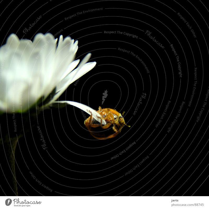 Drahtseilakt Blume Zirkus Akrobatik Halt Blüte Artist Kunst gefährlich Absturz Schweben Angst Panik Makroaufnahme Nahaufnahme Kraft Käfer Mut Held bedrohlich