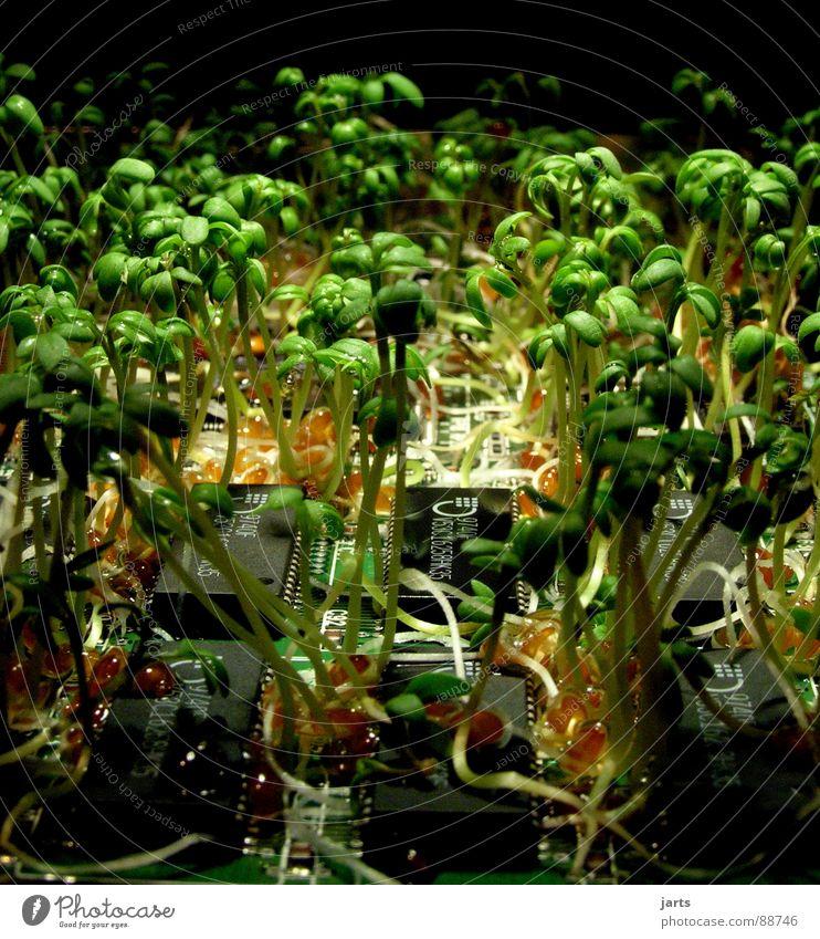Revolution Wissenschaften Natur Pflanze Beginn Vergänglichkeit Zukunft Platine Studioaufnahme Biotechnologie Bionik Prozessor Mikrochip Chipkarte Kresse