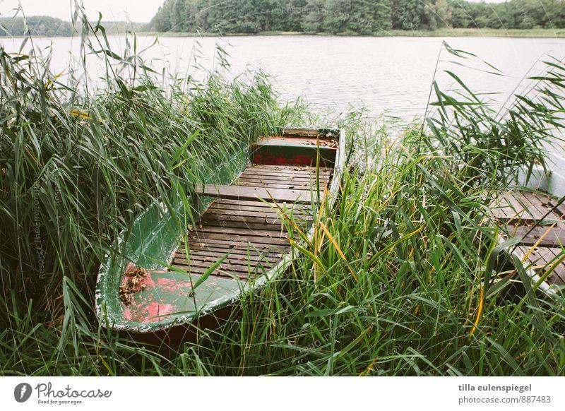 Zu neuen Ufern. Natur Ferien & Urlaub & Reisen alt Pflanze grün Wasser Einsamkeit kalt Umwelt Herbst Gras See Horizont Freizeit & Hobby wild trist