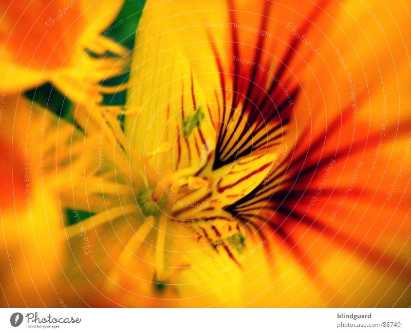 Summerfeelings schön Pflanze Sommer Blume gelb Garten orange Blüte Samen Stempel bestäuben