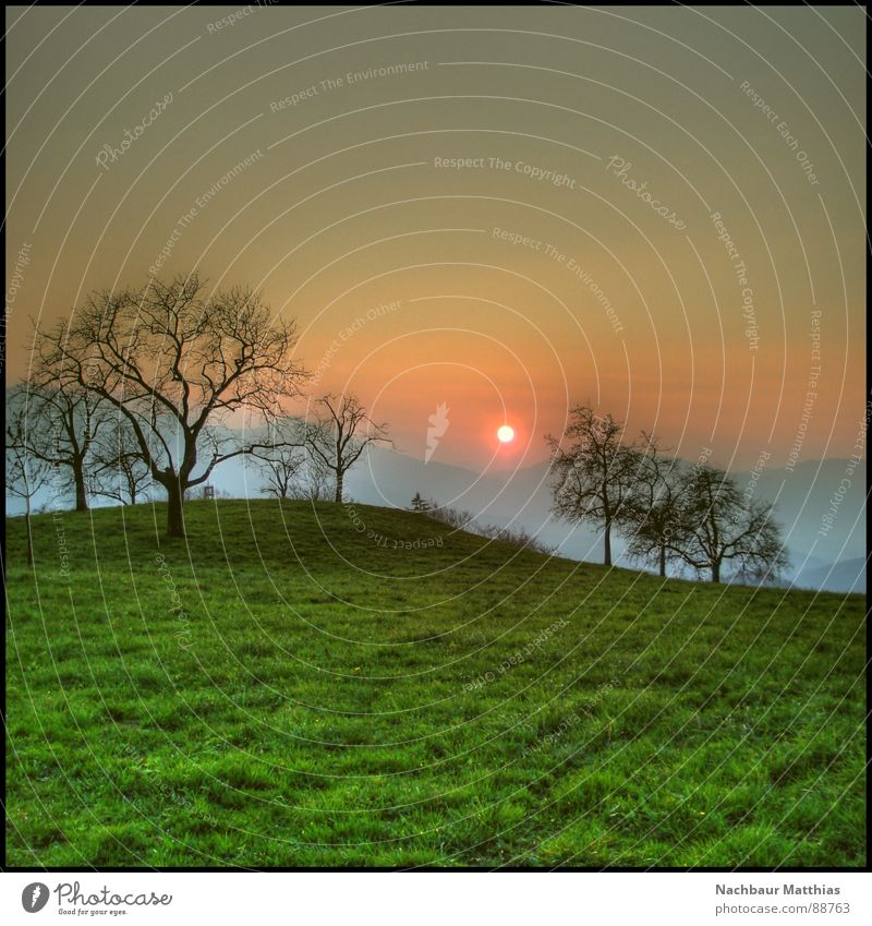 sunset Natur Baum Sonne grün Wiese Gras Berge u. Gebirge Frühling Landschaft Amerika Sonnenuntergang Bundesland Vorarlberg
