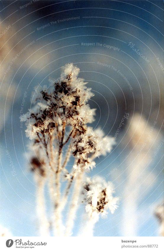 Eisblumen in Schweden weiß Blume blau Winter Ferien & Urlaub & Reisen kalt Schnee frisch Kristallstrukturen Skandinavien
