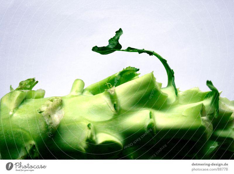 einsammer brokolie* Stengel kaputt Vitamin lecker hellgrün dunkelgrün weiß Studioaufnahme Rohkost Sauberkeit rund gelb Leben Gesundheit Gabel knackig Küche roh