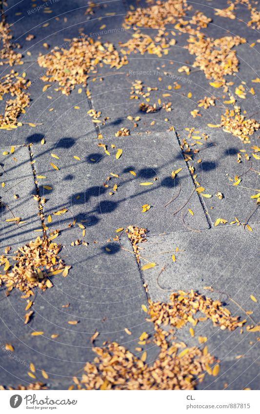 runtergucken Umwelt Natur Pflanze Blume Blüte Wege & Pfade Bürgersteig verblüht Vergänglichkeit Wandel & Veränderung Schattenspiel Stengel Farbfoto