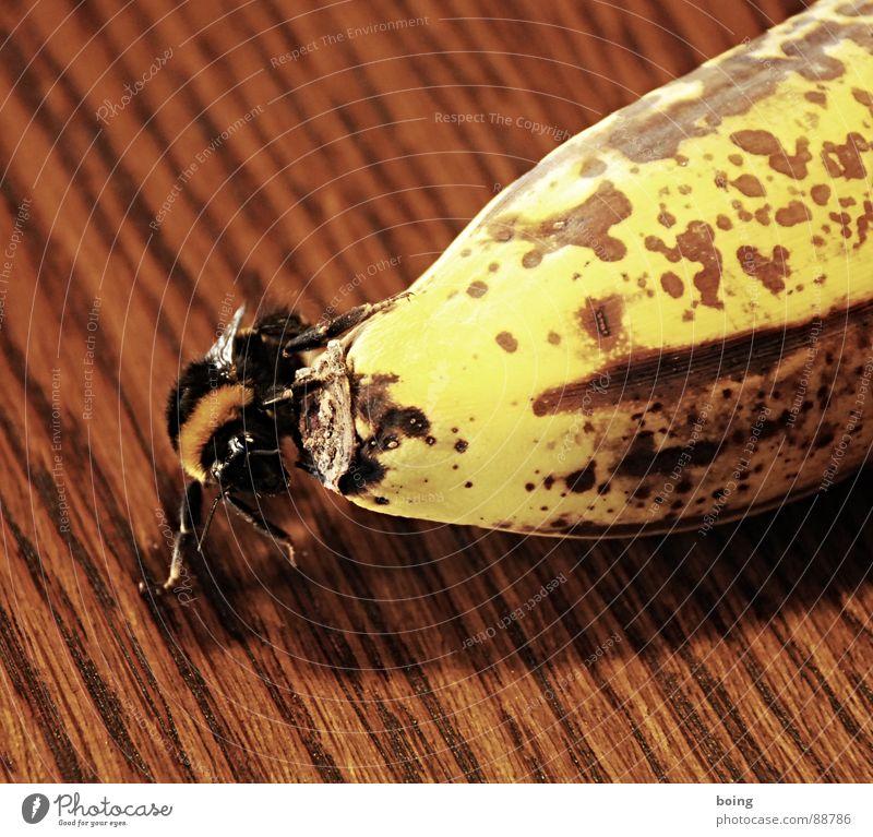 Nach den Gesetzen der Aerodynamik ... zu fliegen fliegen Frucht Insekt Biene Schalen & Schüsseln Hummel Abheben Banane Wespen Südfrüchte Gastfreundschaft