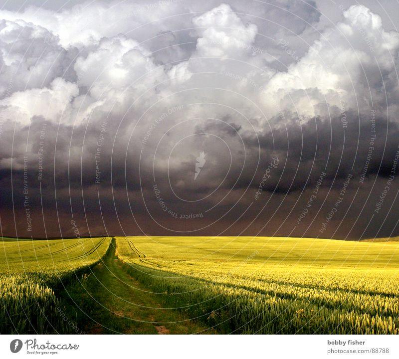 da kommt was Natur Wolken gelb Wege & Pfade Landschaft Wetter Horizont bedrohlich Gewitter Raps Verkehr