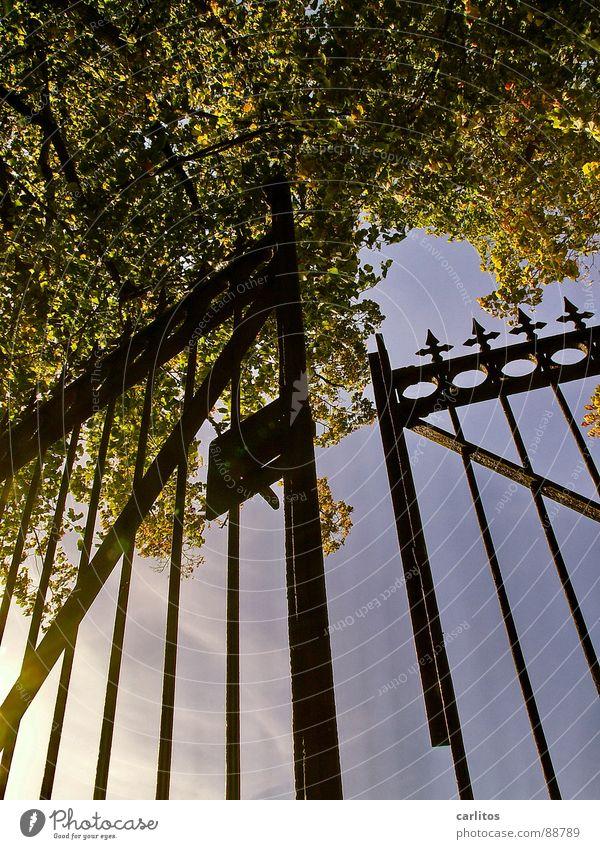Noch einen Spalt breit offen .... Tor Friedhof ruhig Ewigkeit Unendlichkeit ruhen Tod Froschperspektive Gegenlicht Schmiedeeisen Schmiedekunst Pfosten
