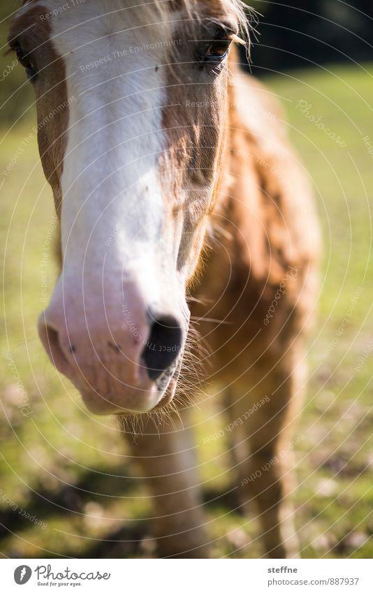 Tierisch gut: Pferd Sonnenlicht Herbst Schönes Wetter Nutztier 1 braun Reiten Reiterhof Nahaufnahme Farbfoto Außenaufnahme Textfreiraum unten