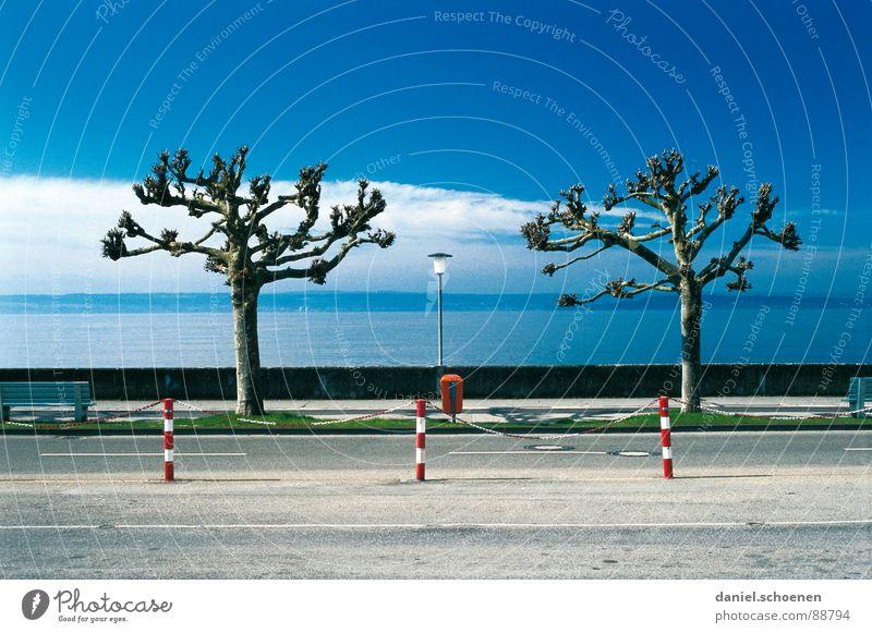 Ordnung muß sein Baum See Symmetrie penibel bizarr Winter Verkehrswege Küste Himmel Reihe blau wolken. herbst deurschland Bodensee