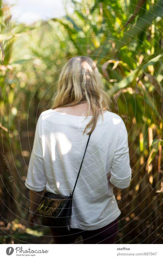 take care of wegelagerer Mensch Junge Frau Jugendliche 1 18-30 Jahre Erwachsene Herbst gehen Maisfeld Irrgarten Wege & Pfade blond Farbfoto Rückansicht