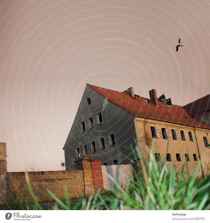 mein lieber herr gesangsverein Haus Ruine Scheune Bauernhof Reichtum reich Fenster Fensterrahmen Baustelle Neubau Dach Gras Backstein Dachziegel Storch