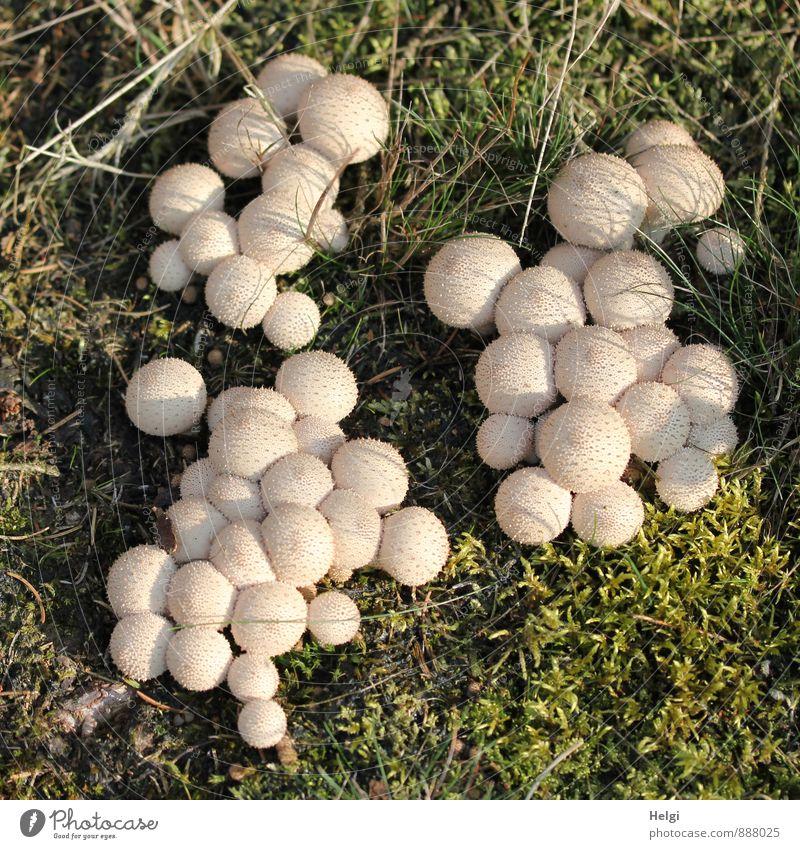 Gruppenfeeling | Kuschelgruppe Natur Pflanze grün Landschaft Wald Umwelt Leben Herbst natürlich klein außergewöhnlich braun Zusammensein Ordnung Wachstum