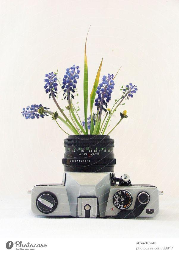 blühende Fotografie Blume Freude gelb Blüte Glück rosa Design Hoffnung Wachstum Freizeit & Hobby Fotokamera Blühend Gänseblümchen Blütenknospen