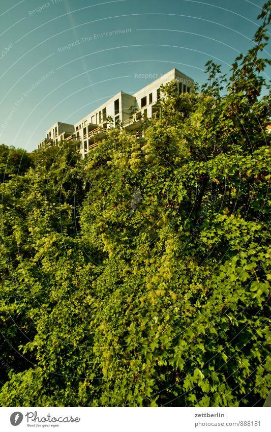 Neubau Baustelle Haus Wohnhaus Wohnhochhaus Wohnung Wohnungssuche Wohnungssituation Natur Sträucher Pflanze Baum Ast Zweig Blatt verstecken Versteck Beton