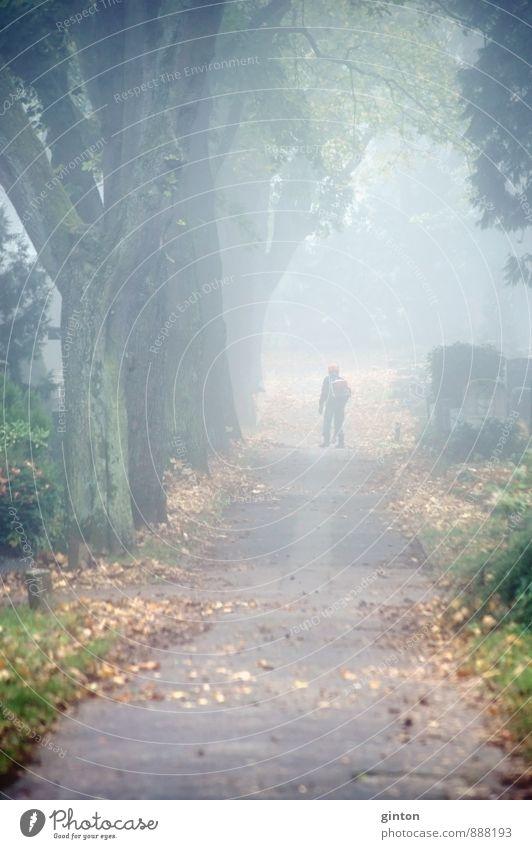 Laubgebläse Arbeit & Erwerbstätigkeit Beruf Gartenarbeit Mann Erwachsene Landschaft Pflanze Herbst Wetter Nebel Baum Sträucher Blatt Grünpflanze Park Stadt