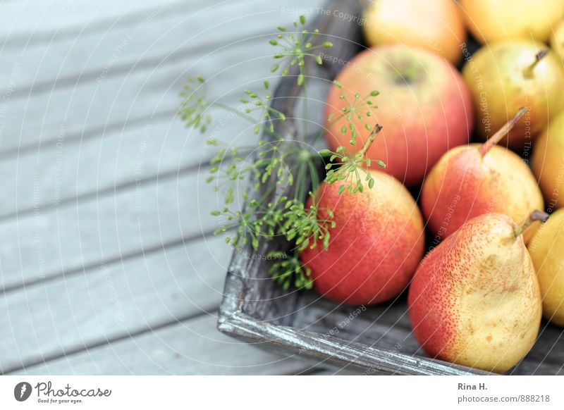 Reiche Ernte rot Gesundheit Frucht frisch Lebensfreude lecker Ernte Apfel Bioprodukte Vitamin Vegetarische Ernährung Landleben Holztisch Birne Dill