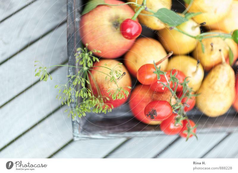 Reiche Ernte II Gemüse Frucht Ernährung Bioprodukte Vegetarische Ernährung frisch Gesundheit lecker gelb rot Lebensfreude Apfel Birne Tomate Peperoni Dill
