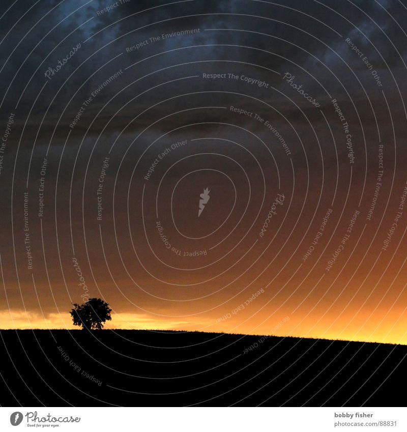 es dunkelt Baum Sonnenuntergang Stimmung Licht Abend Einsamkeit Hoffnung Wolken Natur Landschaft Himmel Traurigkeit trist