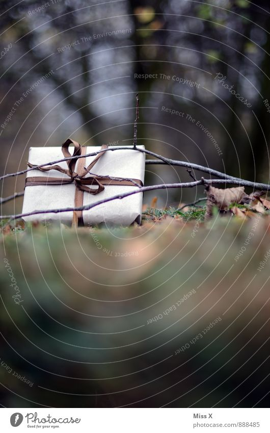 Geschenk Natur Weihnachten & Advent Blatt Winter Wald Wiese Herbst Gras Feste & Feiern Garten braun liegen Geburtstag Ast Geschenk verstecken
