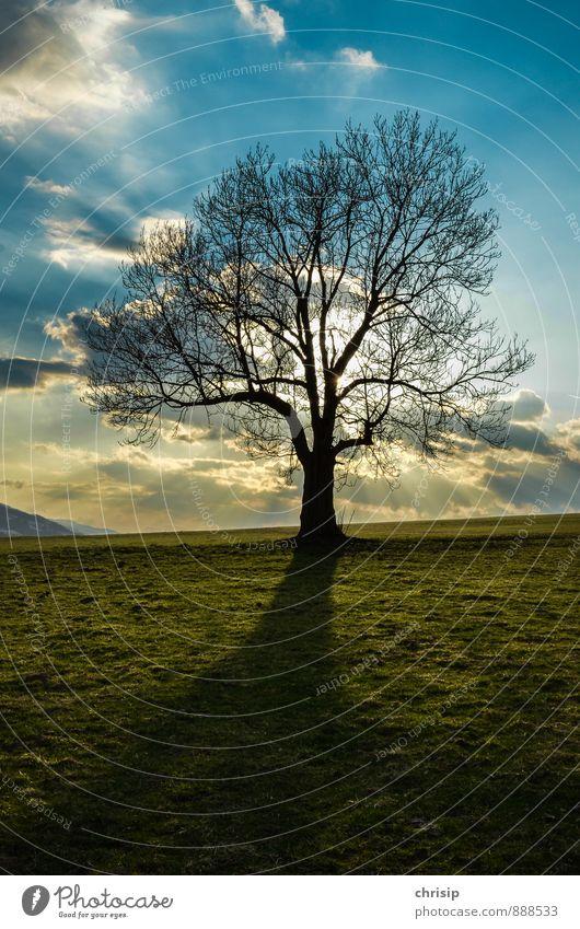 Baum Umwelt Natur Landschaft Luft Himmel Wolken Sonne Sonnenaufgang Sonnenuntergang Sonnenlicht Wetter Schönes Wetter Pflanze Wiese Feld dunkel Ferne groß Wärme