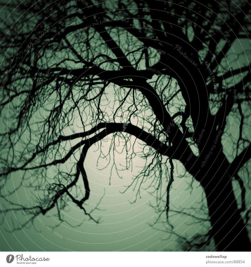 fangorn Baum Wald dunkel Angst laufen Ast gruselig verloren Panik Hexe Verhext beängstigend Holzmehl Mitternacht