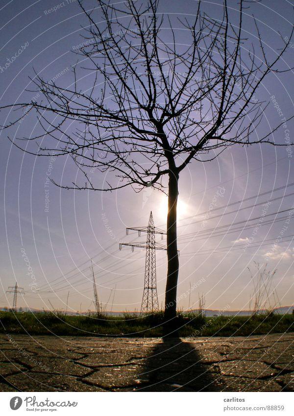 Wachsen hier Glühbirnen ?? Sonne blau Gras Wetter Energiewirtschaft Wissenschaften Sonnenenergie aufwärts Strommast ökologisch blenden Ameise Oberleitung
