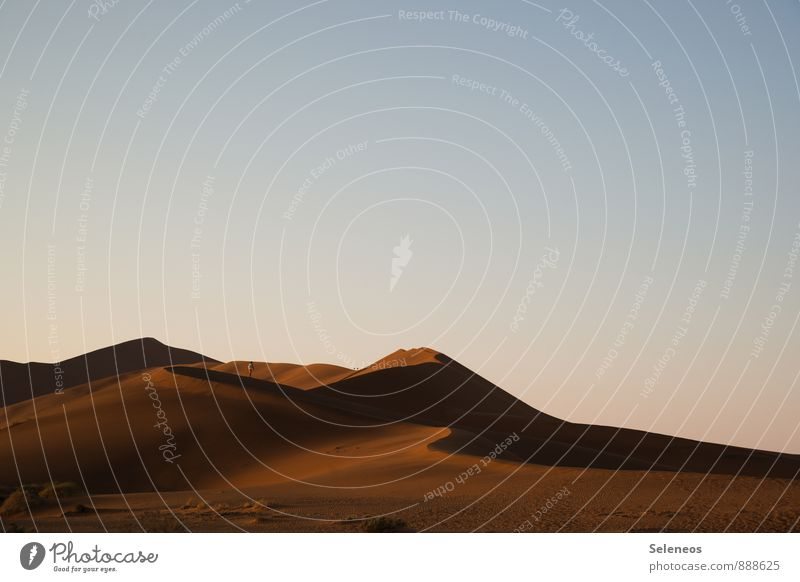 Morgenspaziergang Ferien & Urlaub & Reisen Tourismus Ausflug Abenteuer Ferne Freiheit Sommer wandern Mensch Umwelt Natur Landschaft Wüste frei Sehnsucht Fernweh