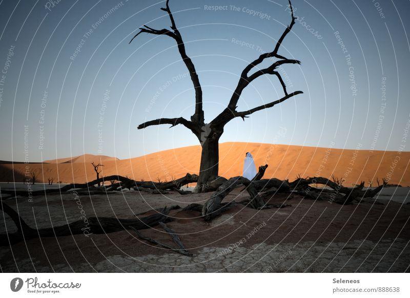 Death Vlei Ferien & Urlaub & Reisen Tourismus Ausflug Abenteuer Ferne Freiheit Mensch Frau Erwachsene 1 Umwelt Natur Landschaft Himmel Wolkenloser Himmel Baum