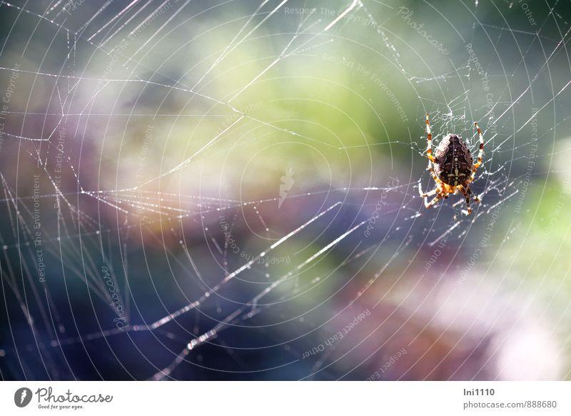 Reparaturarbeit Natur Farbe weiß Sommer Sonne Tier Umwelt Wärme Bewegung Garten braun Arbeit & Erwerbstätigkeit Luft Park orange Wetter