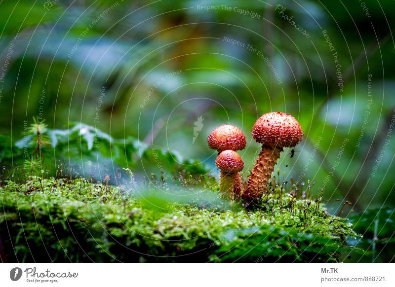 Gemeinsam Natur Pflanze Herbst Pilz Wald Menschenleer Gefühle Stimmung Kraft Vertrauen Sicherheit Schutz Geborgenheit Einigkeit Sympathie Partnerschaft Leben