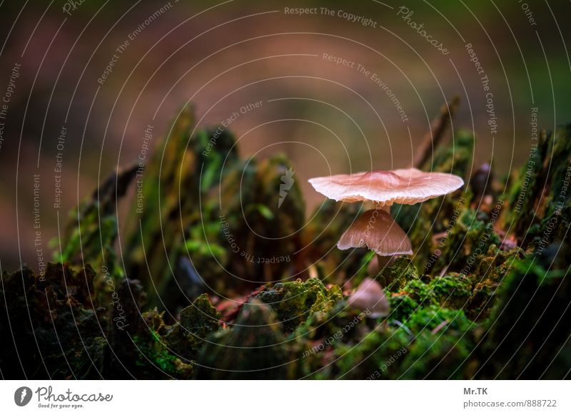 Behütet Natur Pflanze Herbst Pilz Wald Schwäbische Alb Menschenleer Gefühle Stimmung Glück Zufriedenheit Vertrauen Schutz Geborgenheit Warmherzigkeit