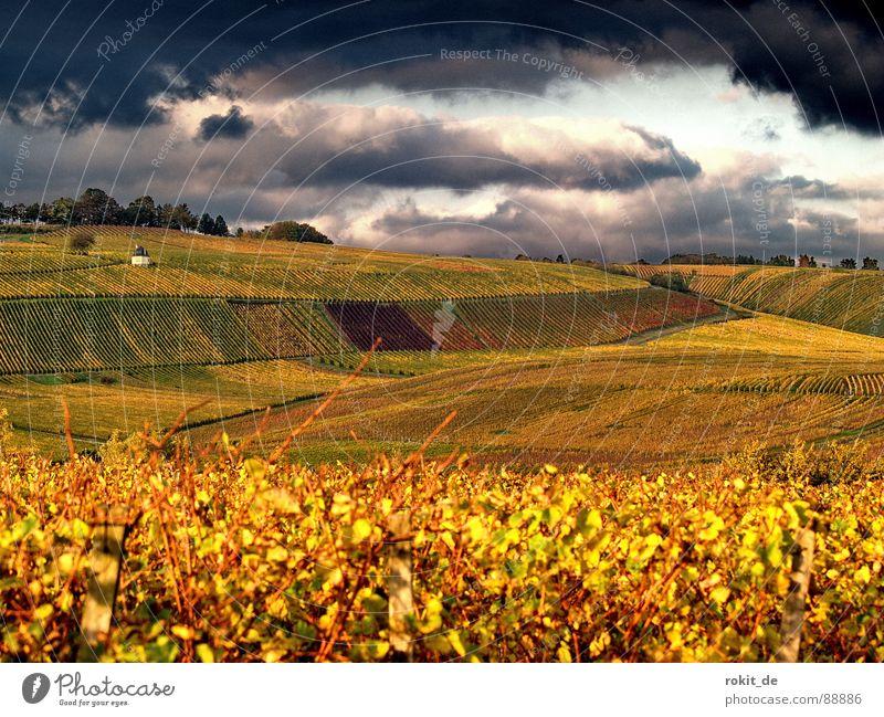 Das nächste... Unwetter Wein Wolken Weinberg Herbst dunkel gelb Sonnenuntergang bedrohlich Blatt Berghang Gold Abend Rheingau böse Windzug Fahrstuhl Gras Himmel