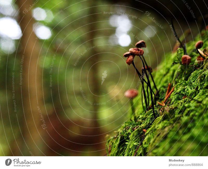 Wild mushrooms Natur Pflanze grün weiß Sommer Baum Blatt schwarz Wald Umwelt gelb natürlich grau braun orange Wachstum