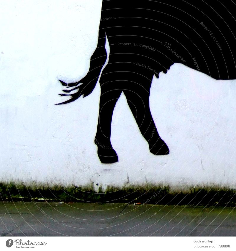 two pints please schwarz Wand Graffiti Mauer Kuh Schwanz Heck Huf Rind Milcherzeugnisse Euter