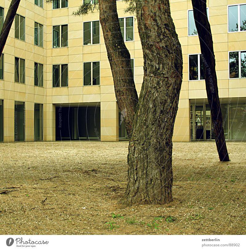 Kohlenstofffixierung {f}  = carbon fixation Haus Leben kalt Berlin Fenster Raum Fassade modern leer Häusliches Leben Kiefer Innenhof Neubau Potsdamer Platz