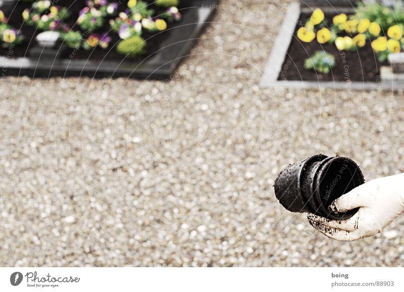 Mikrogarten Stiefmütterchen Friedhof Grab Trauer Sorge Erinnerung Souvenir Beerdigung erinnern Respekt Topfpflanze Pflanze Gartenarbeit Abschied Tod Trauerfeier