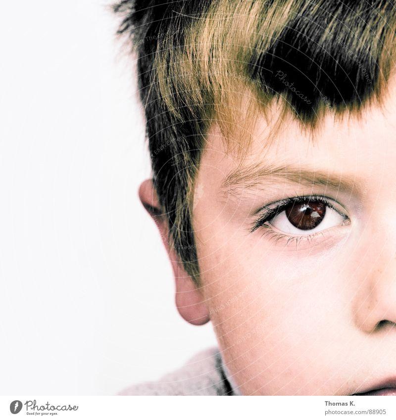Halb sowieso Mensch Kind ruhig Auge Junge Nase Ohr Konzentration Haarschnitt