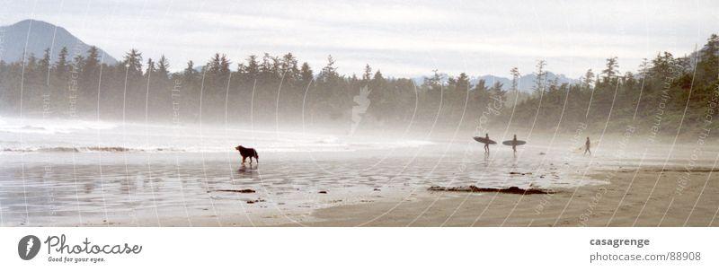Tofino Springsurf Hund Meer Strand Wald Sand Nebel groß Panorama (Bildformat) Kanada Surfer Wasserdampf Vancouver Island Long Beach
