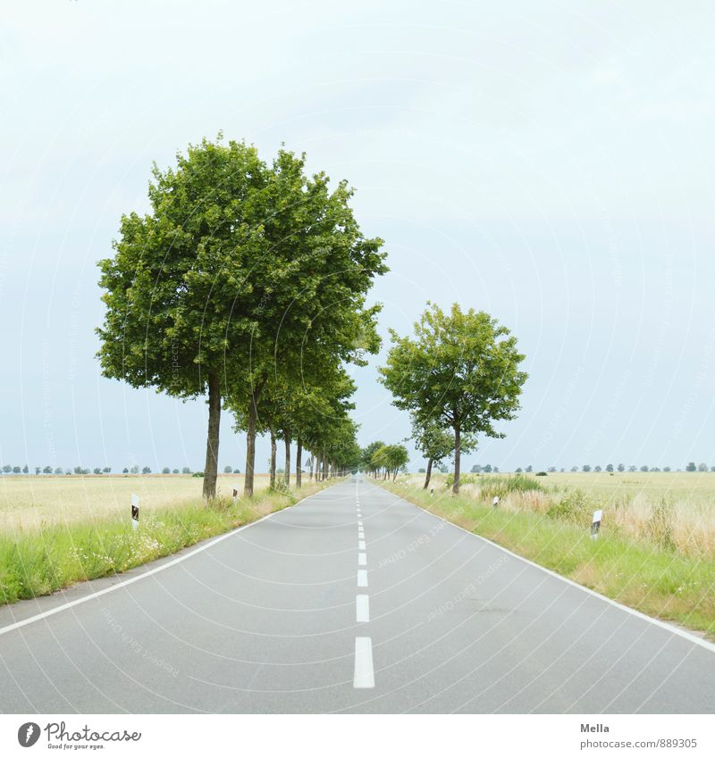 Bis zum Horizont, dann links Umwelt Landschaft Baum Verkehrswege Straße Landstraße Fahrbahn Fahrbahnmarkierung Mittelstreifen Seitenstreifen Allee Asphalt Linie