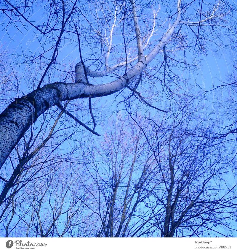 verzweigt Himmel Baum blau Ast leicht beweglich luftig aufstrebend