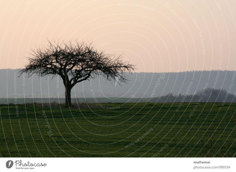 Baum zeigt Flagge ruhig Umwelt Natur Landschaft Pflanze Erde Himmel Frühling Herbst Wetter Schönes Wetter Wiese Feld blau grün Beginn Frieden Baumkrone Ast