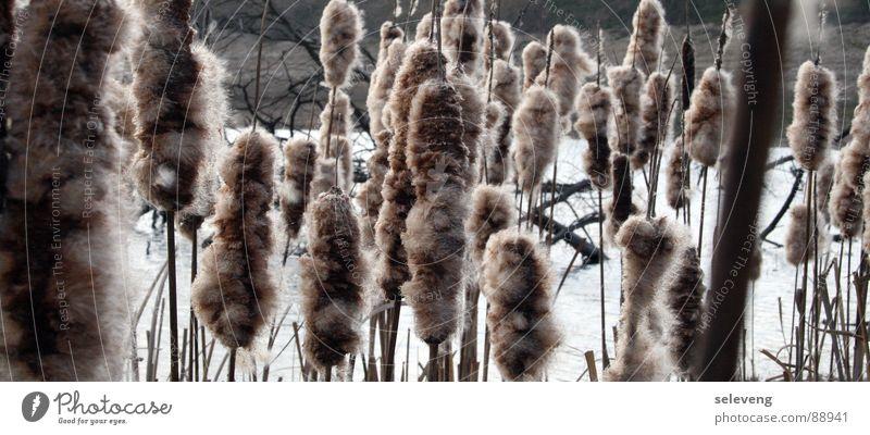 ... gespickte Hamster im Wind Wasser Pflanze See Küste Schilfrohr Gras