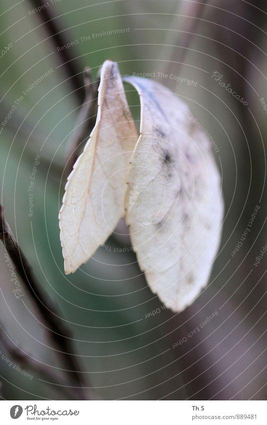 Blatt Natur Pflanze schön ruhig Bewegung Herbst natürlich elegant Idylle Zufriedenheit authentisch ästhetisch einfach Blühend einzigartig Gelassenheit