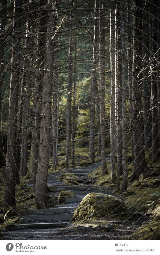 Austrian Stairwood Natur Ferien & Urlaub & Reisen grün Sommer Baum Landschaft Wald kalt Umwelt Berge u. Gebirge Gras Sport Felsen Erde Zufriedenheit wandern