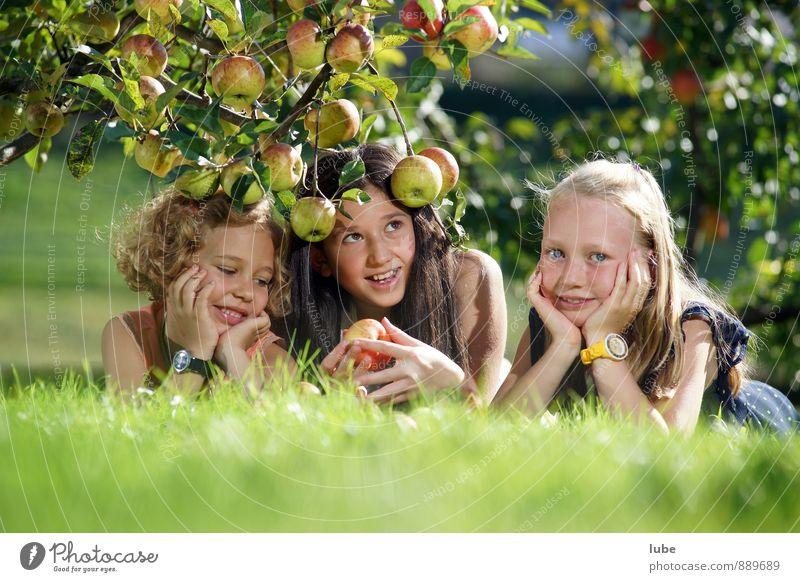 Apfelgirls Lebensmittel Frucht Gesundheit Garten Mensch Mädchen Kindheit 3 8-13 Jahre Natur Landschaft Herbst Wiese natürlich Freude Fröhlichkeit Zufriedenheit