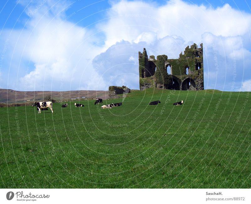 Burgruine Ruine Gras grün Wiese Kuh Außenaufnahme Wolken Kerry verfallen Burg oder Schloss Landschaft Republik Irland Ballycarberry Castle