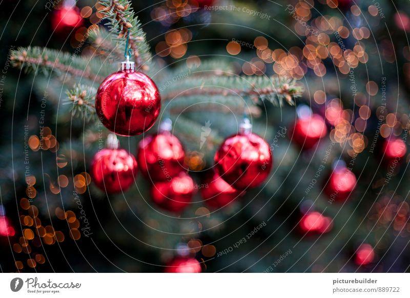 rote Christbaumkugeln Weihnachten & Advent grün Baum Feste & Feiern Stimmung Wohnung glänzend Dekoration & Verzierung Weihnachtsbaum