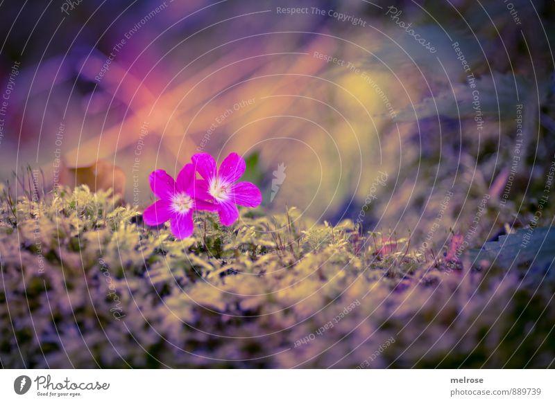 We stick together Natur Pflanze Erde Sommer Blüte Wildpflanze Moosteppich Wald berühren Blühend genießen leuchten braun gelb gold grün violett rosa Gefühle